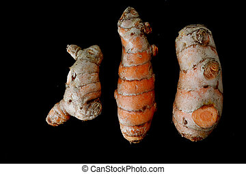 Three fresh organic Turmeric rhizome roots isolated on black...