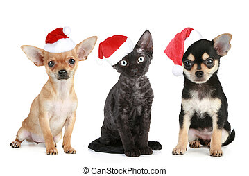 Three friends in Santa caps