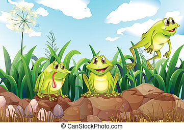 Three frogs above the rocks