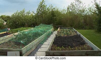 Steady, exterior, medium wide shot of three garden plots in a backyard.