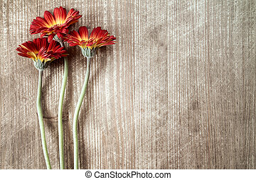 Three gerberas with copy-space