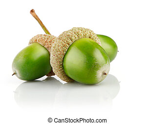 three green acorn fruits isolated