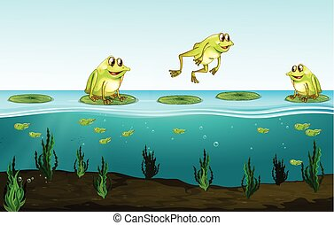 Three green frogs on water lily illustration