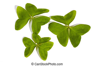 Three Green Leaf Clovers on White Background