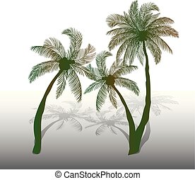 Three green palm trees with shadow on white background,