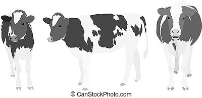 Three Greyscale Cows - Vector Set of three realistic cow ...