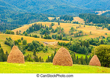 Three haystacks on beautiful summer plateau in Carpathian mountain