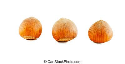 Three dried hazelnut filberts in shell