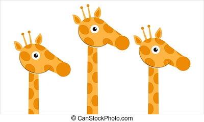 three heads and neck giraffes - Three heads and neck...