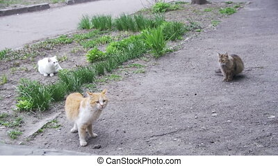 Three Homeless Cats on the Street in the Park. Slow Motion