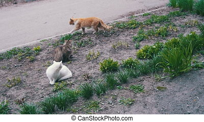 Three Homeless Cats on the Street in the Park