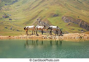 Three horses at the lake