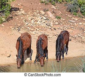 three horses drinking