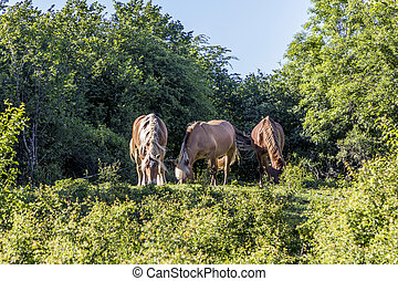 three horses grazing at the meadow in wilderness area in the...