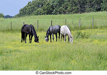 Three Horses Grazing in Spring