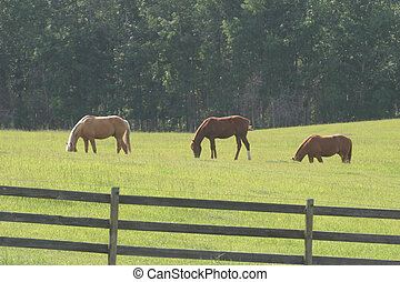 three horses grazing