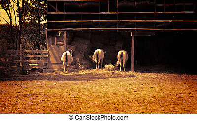 Three horses in farm