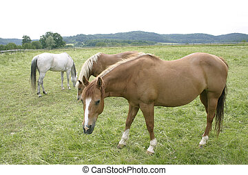 three horses in the countryside