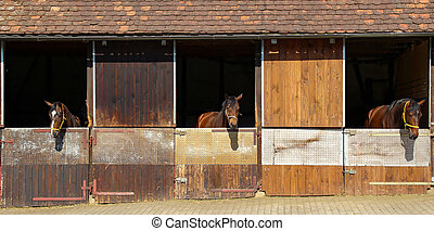 Three horses look out of the stables