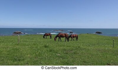 three horses near ocean - horses grazing on green field near...