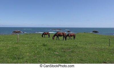 three horses near ocean - horses grazing on green field near...