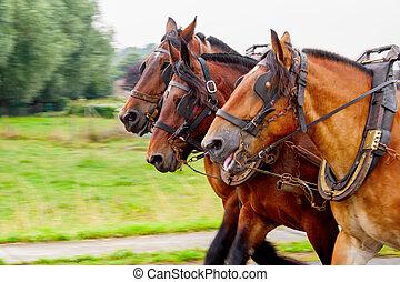 Three horses pulling a yoke and running