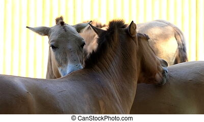 Three Horses Stand And Caress Each Other
