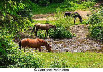 three horses watering on a forest creek. horizontal - three...