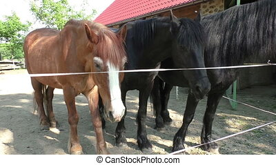 Three horses with the head outside of the stable.