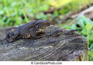 Three identical frogs on a stump in the swamp