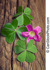 Three irish clovers with its flower on a vintage wood background