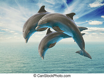 three jumping dolphins, seascape with deep ocean waters and ...