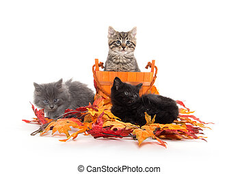 Three kittens and fall leaves