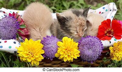 three kittens in wicker basket