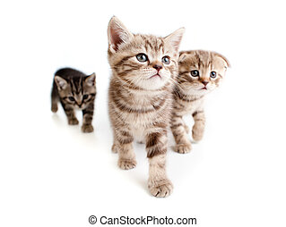 three kittens on white