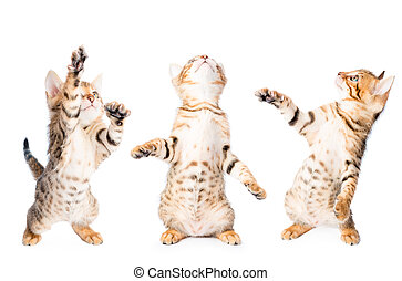 three kittens playing and looking up isolated