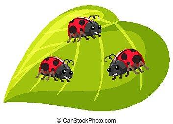 Three ladybugs on green leaf on white background