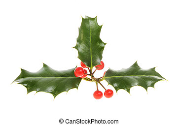 Holly with red ripe berries isolated against white
