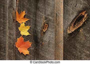 Three leaves, barn wall