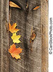 Three leaves, barn wall, knots