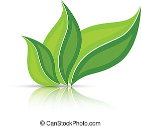 Three leaves isolated on white with reflection - Three ...