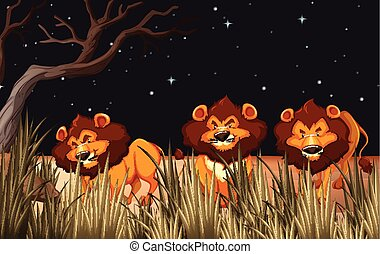 Three lions in the field at night