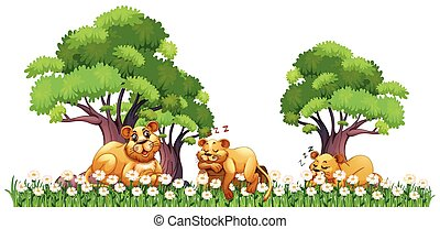 Three lions resting in the field
