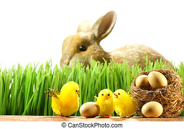 Three little chicks in the grass