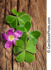 Three lucky irish clovers with its flower on a vintage wood background