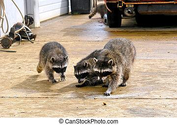 three masked bandits