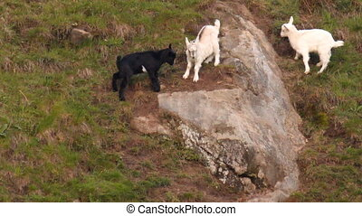 Three merry goats - Three goats bump on the slope