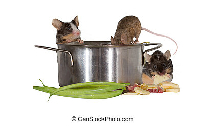 Three mice investigating the kitchen clambering into a...