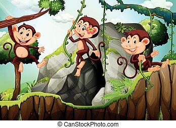 Three monkeys hanging on the branch