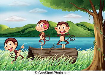 Three monkeys having fun